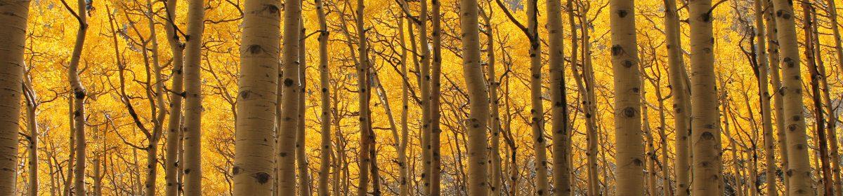Forgotten Pines